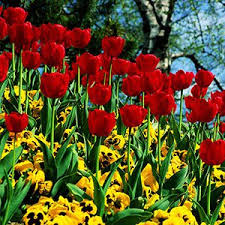 organic-flowers